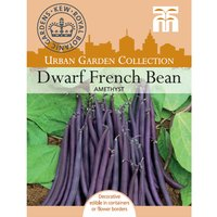 Dwarf Bean
