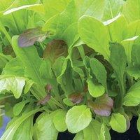 Lettuce Leaves Crunchy Blend