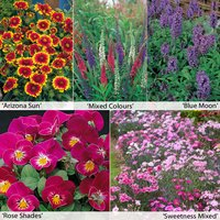 Perennial Flower Border Seed Collection (Short)