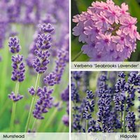 Lavender and Verbena Collection