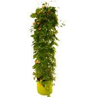 VegTrugandreg; by VegTrugandreg Ltd Patio Planter
