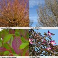 Winter interest Hedging Collection
