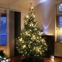 Nordman Fir Christmas Tree