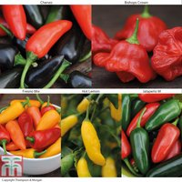 Chilli Pepper Collection