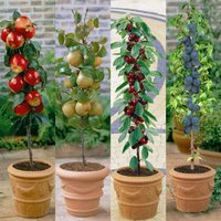 Mini Patio Fruit Tree Collection
