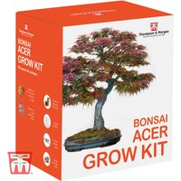 Bonsai Acer Growing Kit