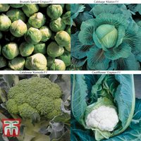 Brassica Clubroot Collection