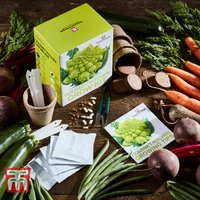 Gourmet Kitchen Growing Kit