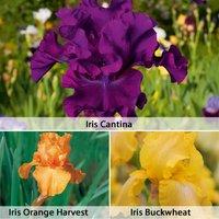 Iris Bearded Collection