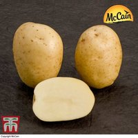 Potato McCain