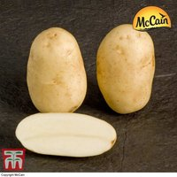 Potato McCain