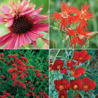 Red Hot Summer Flower Collection