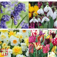 76 Spring Bulb Collection