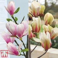 Magnolia Patio Collection