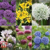 Allium Bumper Pack