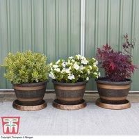 Wooden Barrel Effect Pot and Saucer