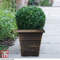 Biscotti Square Patio Pot
