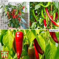 Chilli Pepper Hot Collection