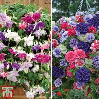 Hanging Basket Duo Collection