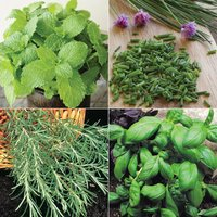 Herb Garden Collection