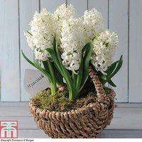 Hyacinth White Willow Basket