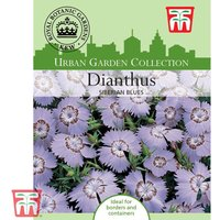Dianthus amurensis Siberian Blues - Kew Collection Seeds