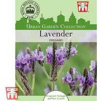 Lavender Oregano - Kew Collection Seeds