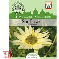 Sunflower Key Lime Pie - Kew Collection Seeds