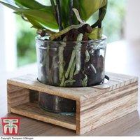 Kindu Glass Pot Wooden Tray Vase