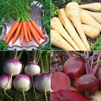 Best Ever Root Veg Collection