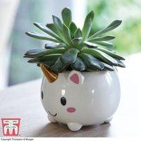 Unicorn Pot with Echeveria Plant (House Plant)