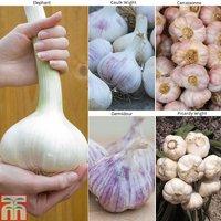Autumn Garlic Collection (Autumn Planting)