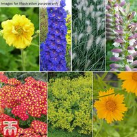 Beautiful Border Perennial Collection