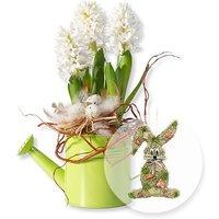 Weiße Hyazinthe in Gießkanne und Türhänger Honey Bunny