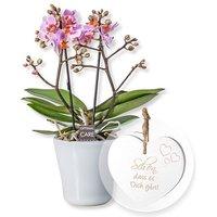 Rosa Orchidee in weißem Keramiktopf und Vintage-Herz Schön, dass es Dich gibt!