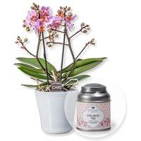 Rosa Orchidee in weißem Keramiktopf und Für Dich Tee