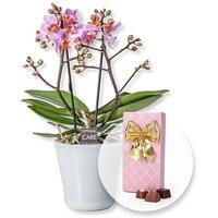 Rosa Orchidee in weißem Keramiktopf und Belgische Pralinen-Auslese