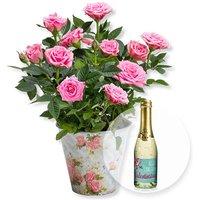 Rosafarbene Rose im romantischen Nostalgie-Topf und Valentinstags-Piccolo