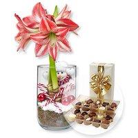 Rot-Weiße Amaryllis im Glas und Belgische Pralinen