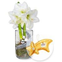 Weiße Amaryllis im Glas und Ferrero Rocher Sternschnuppe