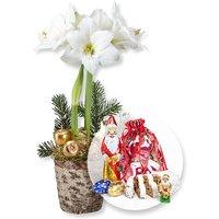 Weiße Amaryllis im Topf und Süßer Adventsgruß