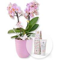 Image of Rosa Orchidee im fliederfarbenem Keramiktopf und Blütenrausch Pfingstrosen-Handcreme Für Dich
