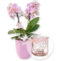 Image of Rosa Orchidee im fliederfarbenem Keramiktopf und Windlicht mit Schleife