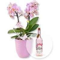 Rosa Orchidee im fliederfarbenem Keramiktopf und Pinke Glasflasche Happy Birthday mit LED