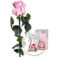Rosafarbene Infinity-Rose und Dreamlight Rosen-Engel