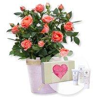 Image of Orangefarbene Rose im Topf und Handpflegeset Alles Liebe