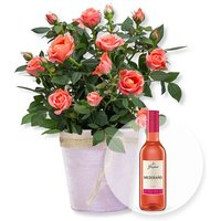 Image of Orangefarbene Rose im Topf und Freixenet Mederano Rosado