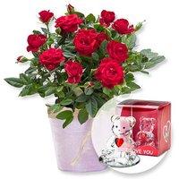 Image of Rote Rose im Topf und Glasbär mit Herz