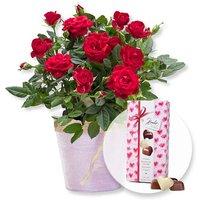 Image of Rote Rose im Topf und Herz-Pralinen-Trio