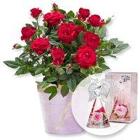 Image of Rote Rose im Topf und Dreamlight Rosen-Engel